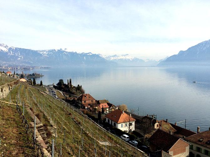 Lac Léman et vigne du Canton de Vaud.